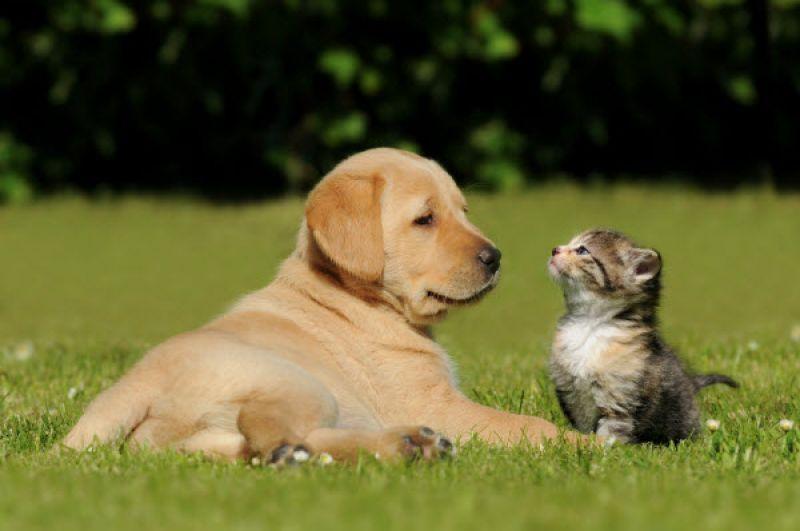 ραντεβού με ζώα
