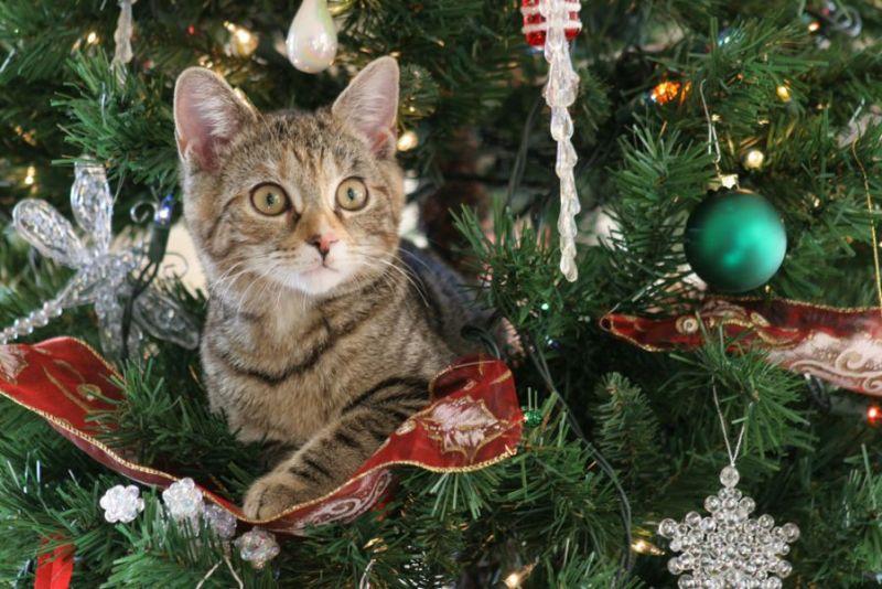 a90a5ca41a97 10 ιδέες για Χριστουγεννιάτικα δέντρα εμπνευσμένες από ιδιοκτήτες  κατοικιδίων.