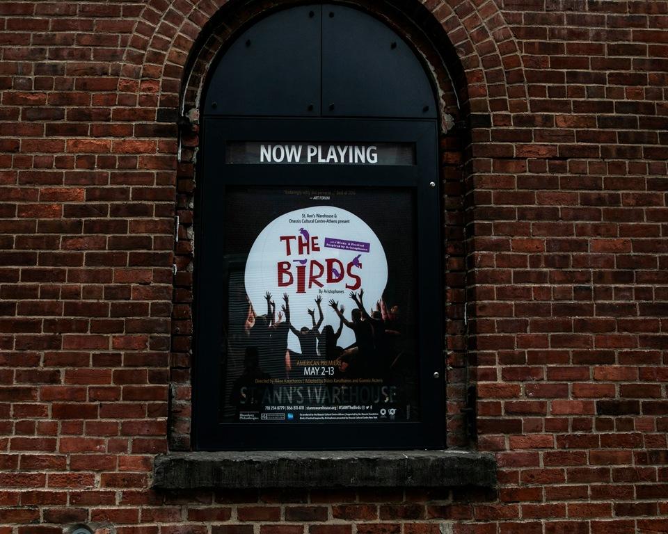 Birds Festival NYAndreas Simopoulos 1