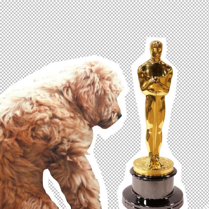 05 bradley cooper dog.w700.h700