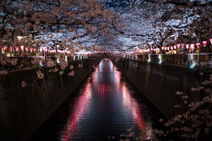 Άνθη κερασιάς ραντεβού site
