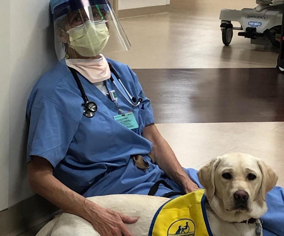 Μια σκυλίτσα στις ΗΠΑ μοιράζει χαρά σε γιατρούς και νοσηλευτικό προσωπικό