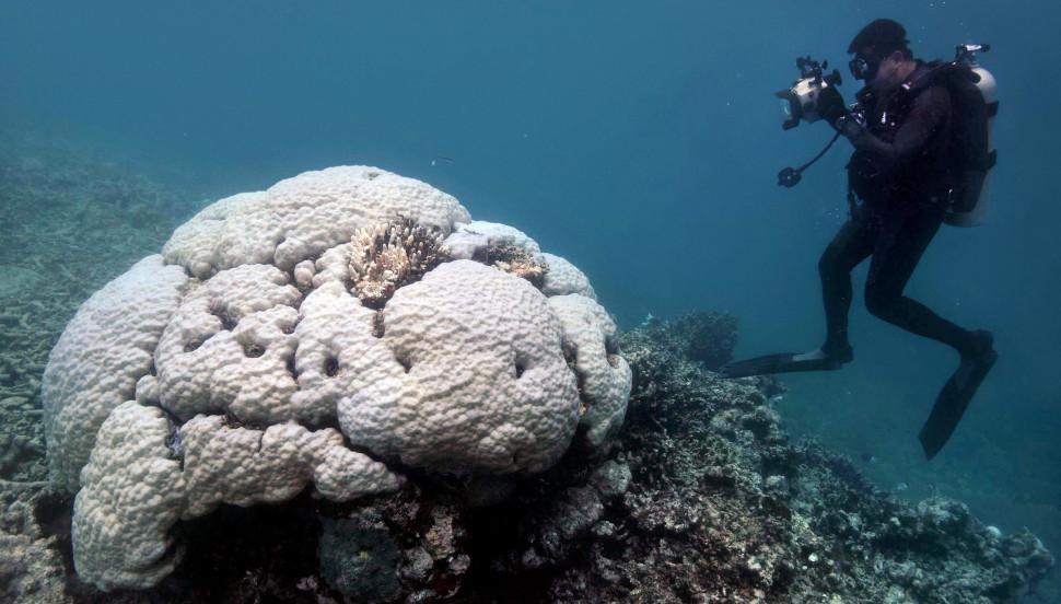 Οι κοραλλιογενείς ύφαλοι της Αυστραλίας έχουν χάσει εντελώς το χρώμα τους