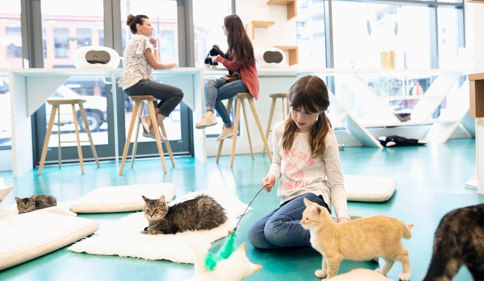 Στα Cat Cafes μπορείτε να πιείτε καφέ, ενώ παίζετε με γάτες