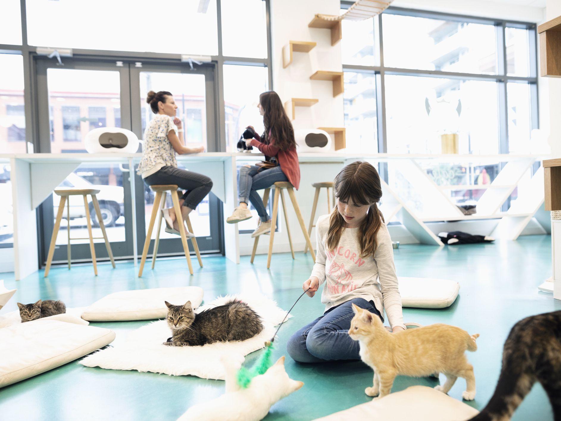 Σε ένα από τα πιο ιδιαίτερα καφέ του κόσμου χαϊδεύεις γατάκια