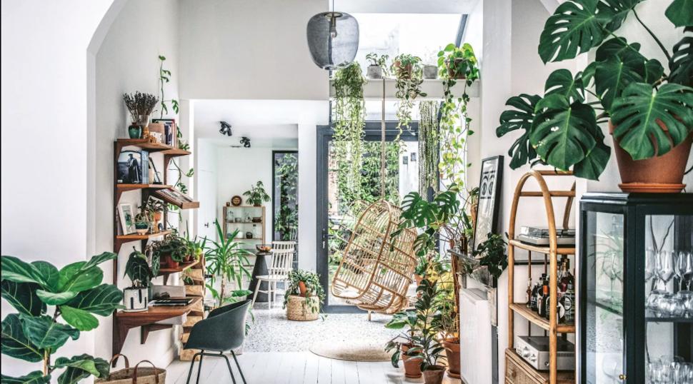 Σπίτι στην Αμβέρσα με φυτά εσωτερικού χώρου, φωτογραφία: Hilton Carter/ CICO Books