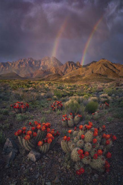 International Landscape Photographer of the Year 2020