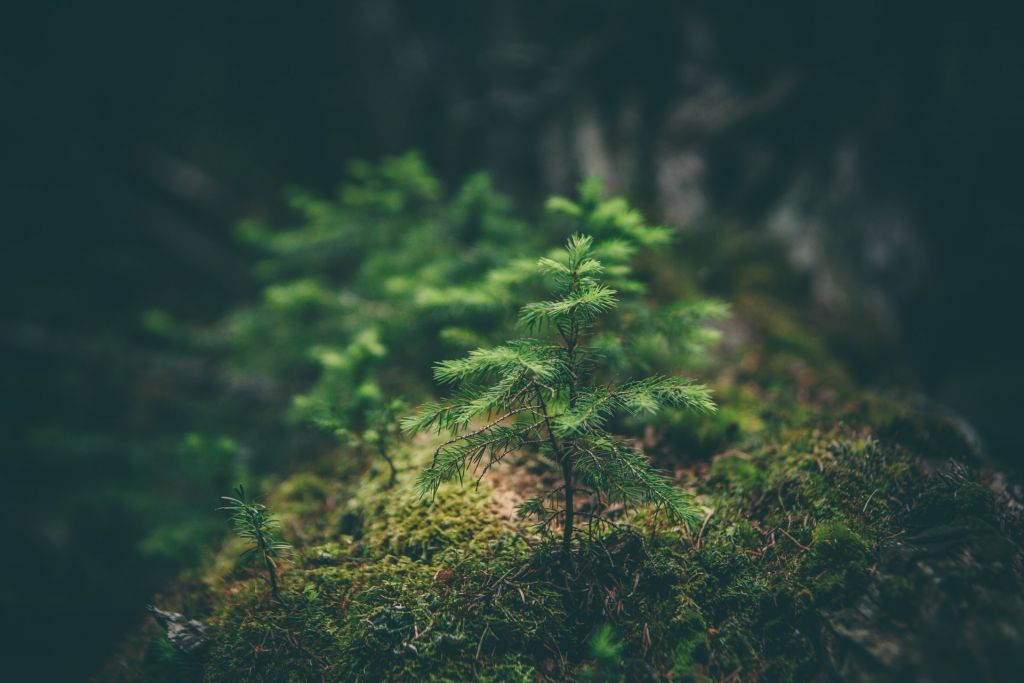 Online επιστημονική διημερίδα: «Κυκλική οικονομία στο φυσικό, αγροτικό και οικισμένο περιβάλλον: αντιλήψεις, διαχείριση και πρακτικές». Φώτο: Matthew Smith/unsplash.com
