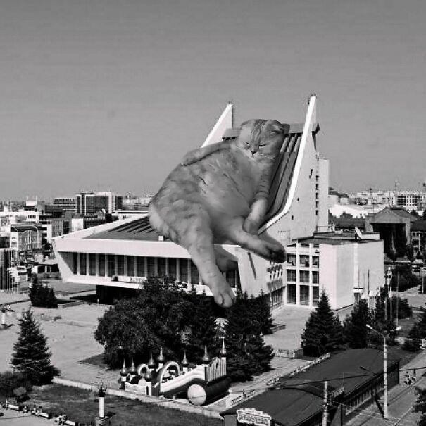 Credits: cats_of_brutalism