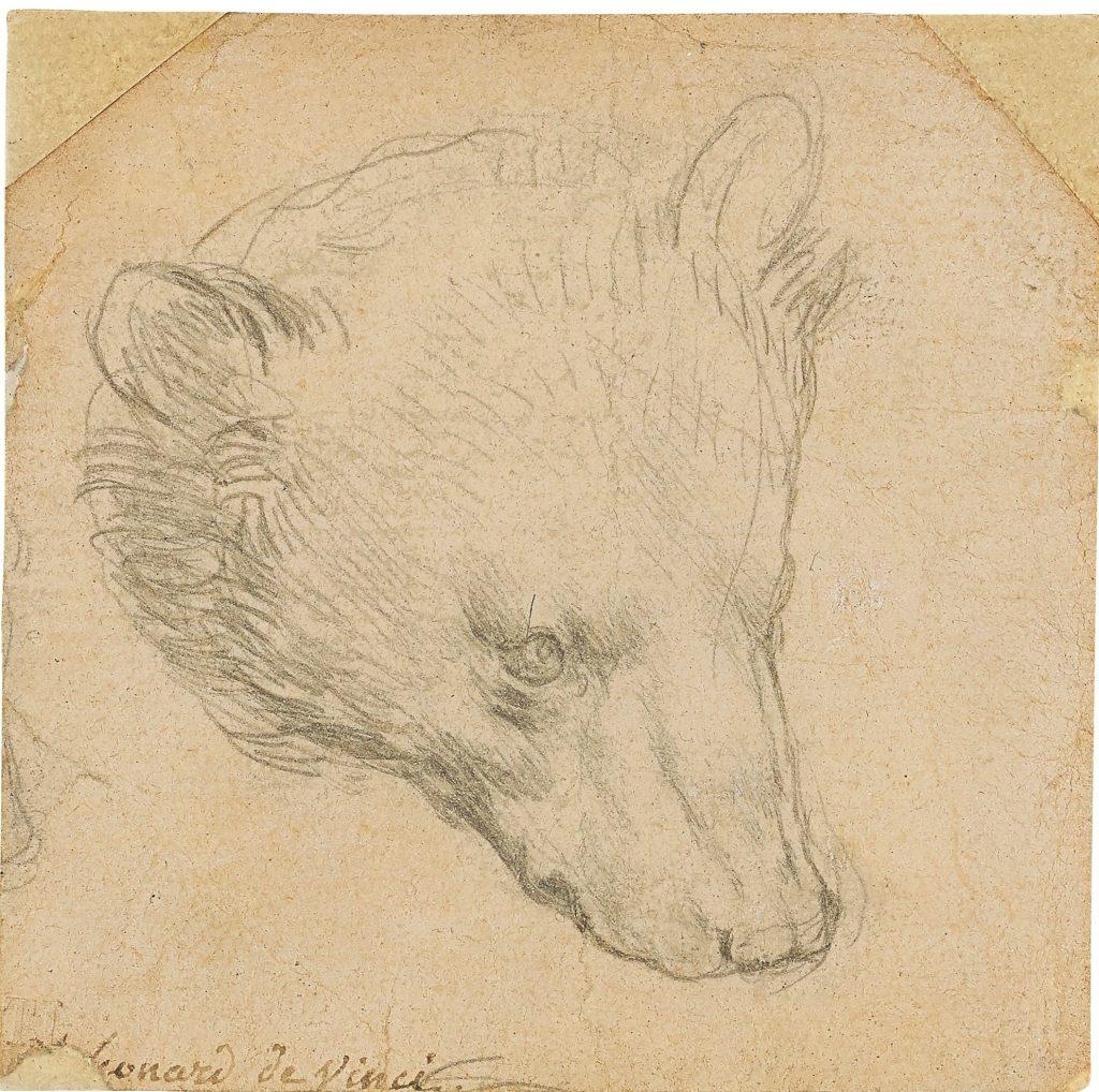 Λεονάρτνο Ντα Βίντσι, Κεφάλι μίας Αρκούδας (1480). Photo courtesy of Christie's New York